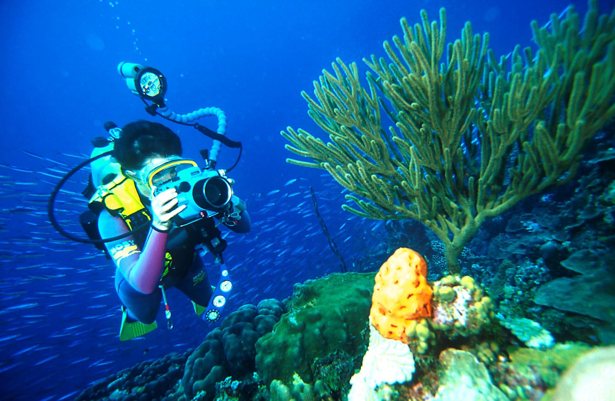 Comment faire de belles photos sous-marines lors des séances de plongée ? -  Maui Bob No Fog